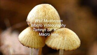 Mushroom Macro Videography Tamron SP 90mm Macro lens