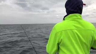 Foca rouba peixe de pescador
