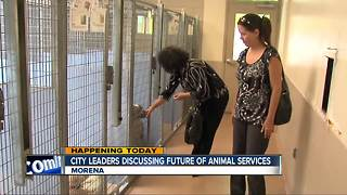 San Diego leaders to discuss future of animal services