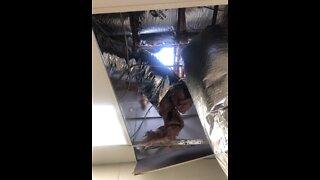 Caught on video: restaurant burglar dives from ceiling