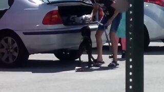 Brevard County woman arrested after shoving dog in car trunk