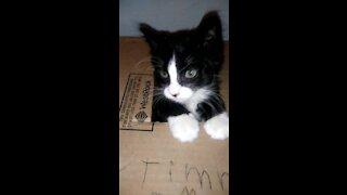 Cute cat in he's little house