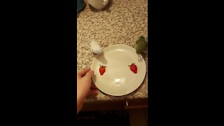 Parrotlets love their strawberries, chow down on tasty treat