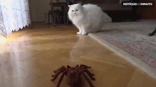 Gato se assusta com aranha robô!