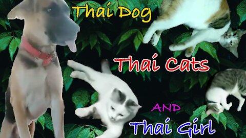 Thai cats, Thai dog and Thai girl.