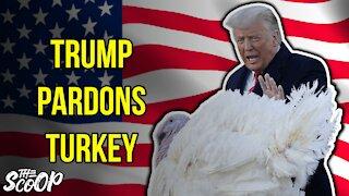 President Trump Participates In 2020 Thanksgiving Turkey Pardon