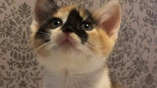 Precious little kitten loves watching TV