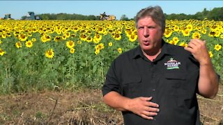 6th generation Wisconsin farm goes back to its roots, spurred by harm caused by pesticides