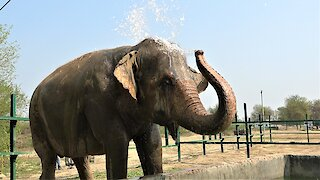 Majestic elephant shows complete joy after being rescued from slavery