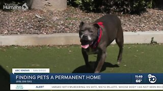 ABC 10News Pet of the Week: Gunny