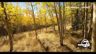 Take a trip through Colorado's golden aspen groves