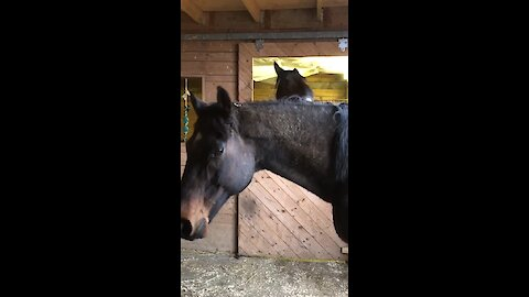 Jealous horse photobombs silly friend's camera time