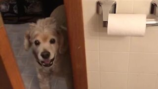 Clingy doggy won't give his owner any privacy
