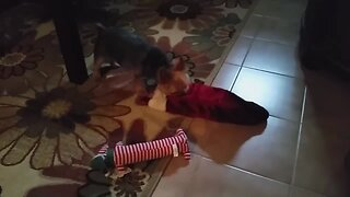 Puppy Can't Wait for Christmas Gifts
