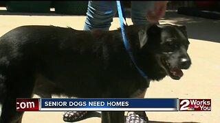 Senior dogs need homes
