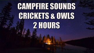 Night Campfire Sounds With Crickets & Owls Hooting 2 Hours
