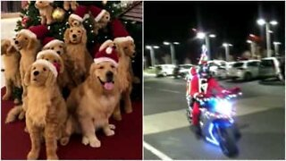 A fantastic video compilation of the Christmas spirit!