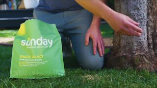 In Good Company: Sunday's all-natural lawn care products