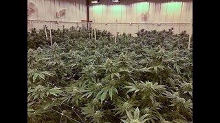 The medical marijuana jobs outside Ohio's state system