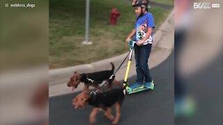 I cani fanno la curva, e lei cade dal monopattino!