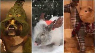 Dyr der er kommet i julestemning