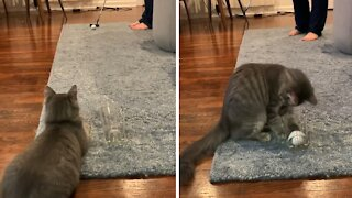 Cat helps owner with his putting game