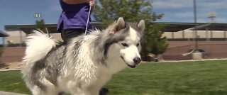 2021 dogs of downtown Summerlin calendar