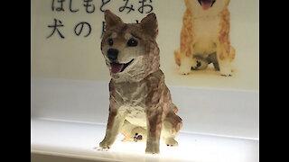 Sculpture Tiny Cute Great: Dog, Spider Man, Car, ...