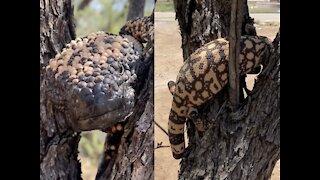 7 Venomous Creatures in Arizona - ABC15 Digital