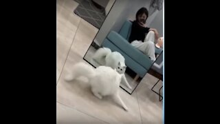 Cute Cat Playing funny with Mirror