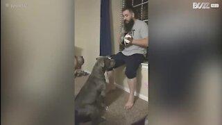 Un chien s'entraîne au muay thai avec son maître