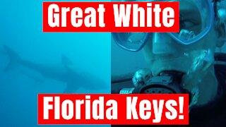 Great White Shark in the Florida Keys