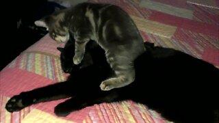 Kitten Makes Bad First Impression on Older Cat