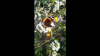 Beautiful Butterfly In The Garden.