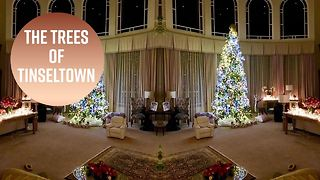 Hollywood's Christmas trees are up!