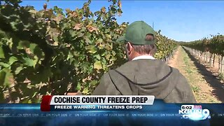 Freeze warning expected for Cochise County, local vineyard prepares