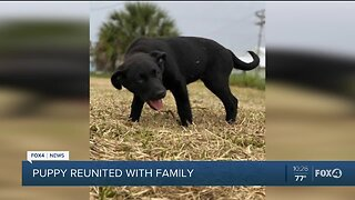 Collier County Sheriff's Office reunites puppy with family