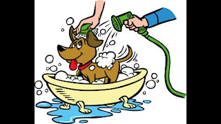 10 things to think about when bathing your dog