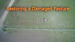 How to restore damaged pasture techniques