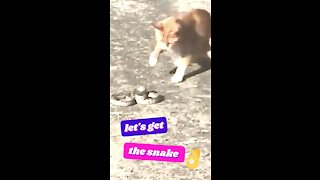 Cat Plays, Let's Get The Snake