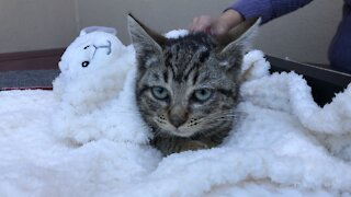 Pet of the week: 2-month-old kitten almost ready for adoption