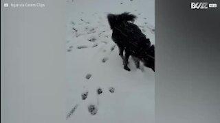 Elle découvre la neige pour la première fois