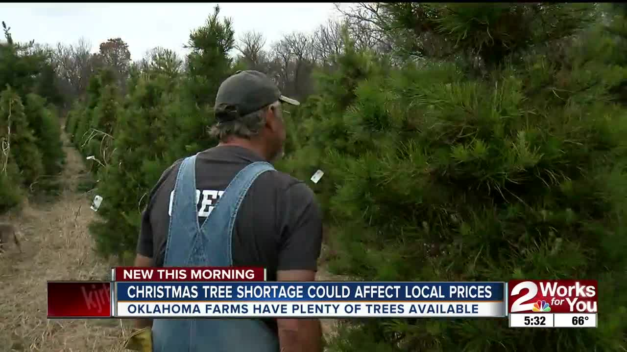 Christmas tree shortage affecting what you pay