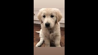Puppy cuteness overload