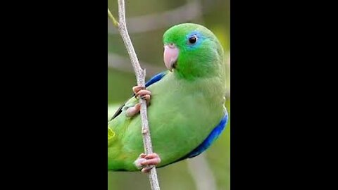 The most cute & smart parrot ever