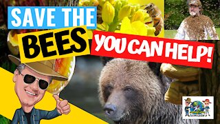The Secret Lives of Bees I Part 2 - SAVE THE BEES! Colony Collapse Disorder