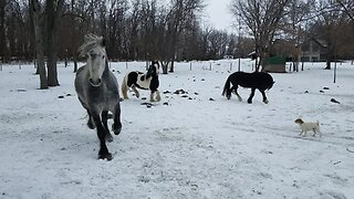 Happy horses having fun playing in the snow
