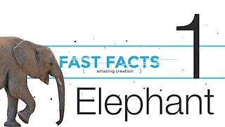 FFE1 | God's Amazing Creation - the Elephant | Fast Facts | Episode 1