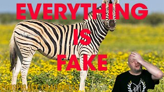 Yes it's THAT Zebra video finally. (Hans Wormhat)