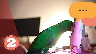 Cute ASMR Talking Parrot whispers #2 | Funny Parrot